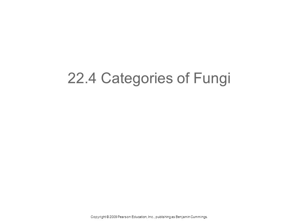 Copyright © 2009 Pearson Education, Inc., publishing as Benjamin Cummings. 22.4 Categories of Fungi