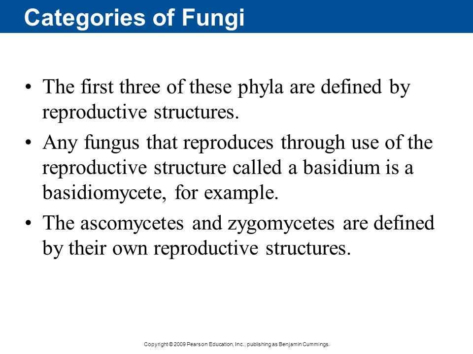 Copyright © 2009 Pearson Education, Inc., publishing as Benjamin Cummings. Categories of Fungi The first three of these phyla are defined by reproduct