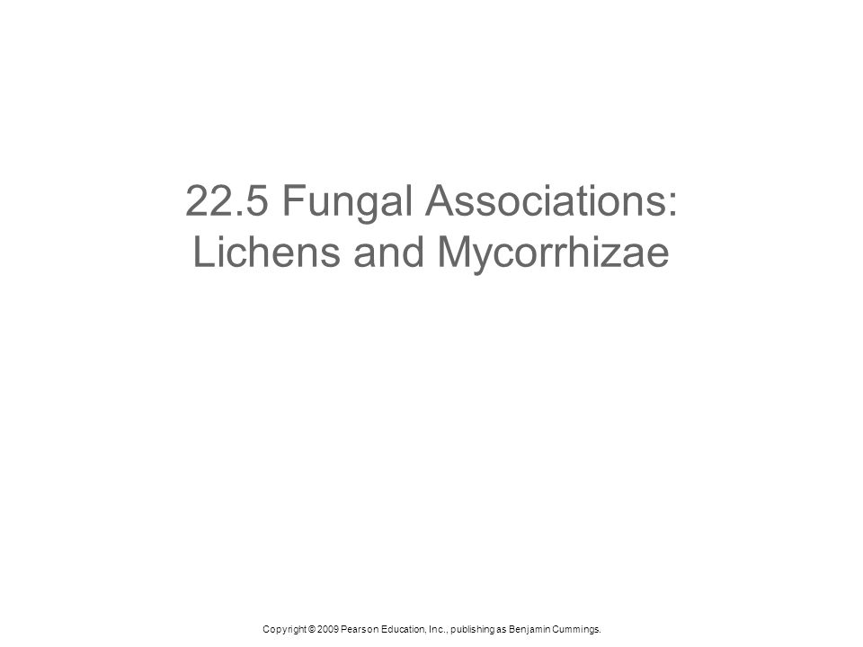 Copyright © 2009 Pearson Education, Inc., publishing as Benjamin Cummings. 22.5 Fungal Associations: Lichens and Mycorrhizae