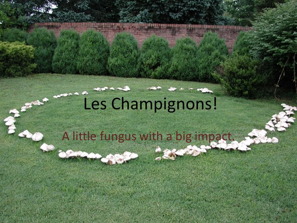 Les Champignons! A little fungus with a big impact.