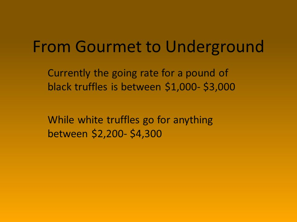 From Gourmet to Underground Currently the going rate for a pound of black truffles is between $1,000- $3,000 While white truffles go for anything between $2,200- $4,300