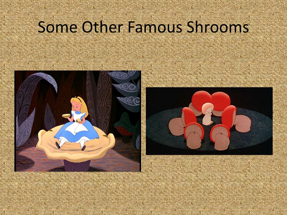 Some Other Famous Shrooms