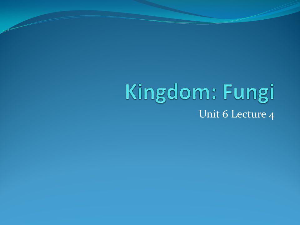 Kingdom Fungi aka Kingdom Mycetae eukaryotes [domain Eukarya] unicellular or multicellular heterotrophic saphrophytic mutualistic parasitic