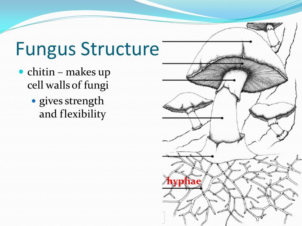 Phyla phyla are grouped by the type of spores they create: zygomycota ascomycota basidiomycota deuteromycota