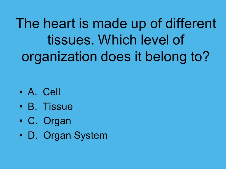 The heart is made up of different tissues. Which level of organization does it belong to? A. Cell B. Tissue C. Organ D. Organ System