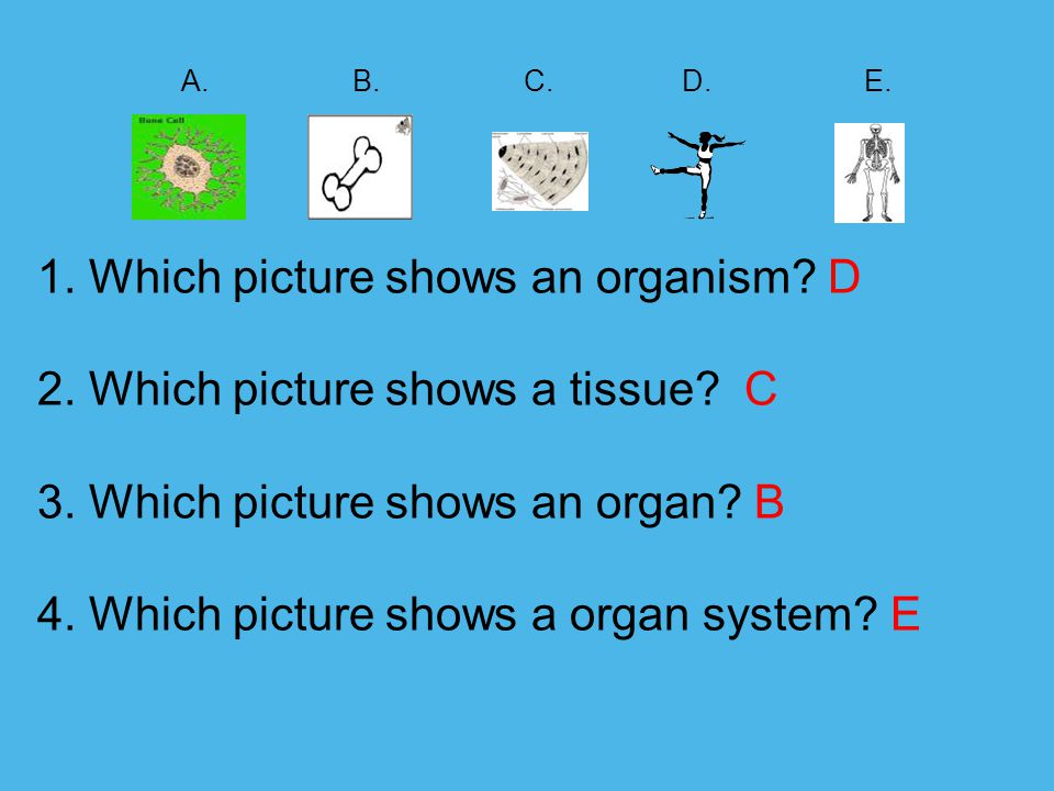 A.B. C. D. E. 1. Which picture shows an organism.