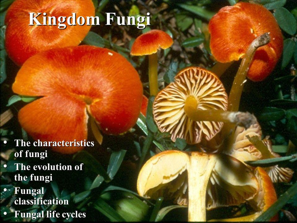 Kingdom Fungi The characteristics of fungi The characteristics of fungi The evolution of the fungi The evolution of the fungi Fungal classification Fu