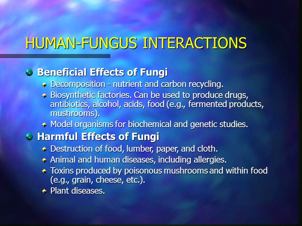 HUMAN-FUNGUS INTERACTIONS Beneficial Effects of Fungi Decomposition - nutrient and carbon recycling. Biosynthetic factories. Can be used to produce dr
