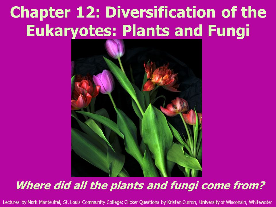 Chapter 12: Diversification of the Eukaryotes: Plants and Fungi Where did all the plants and fungi come from.