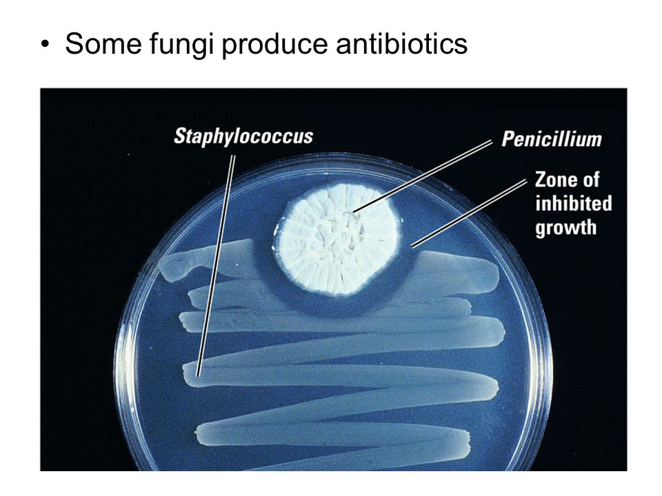 Some fungi produce antibiotics