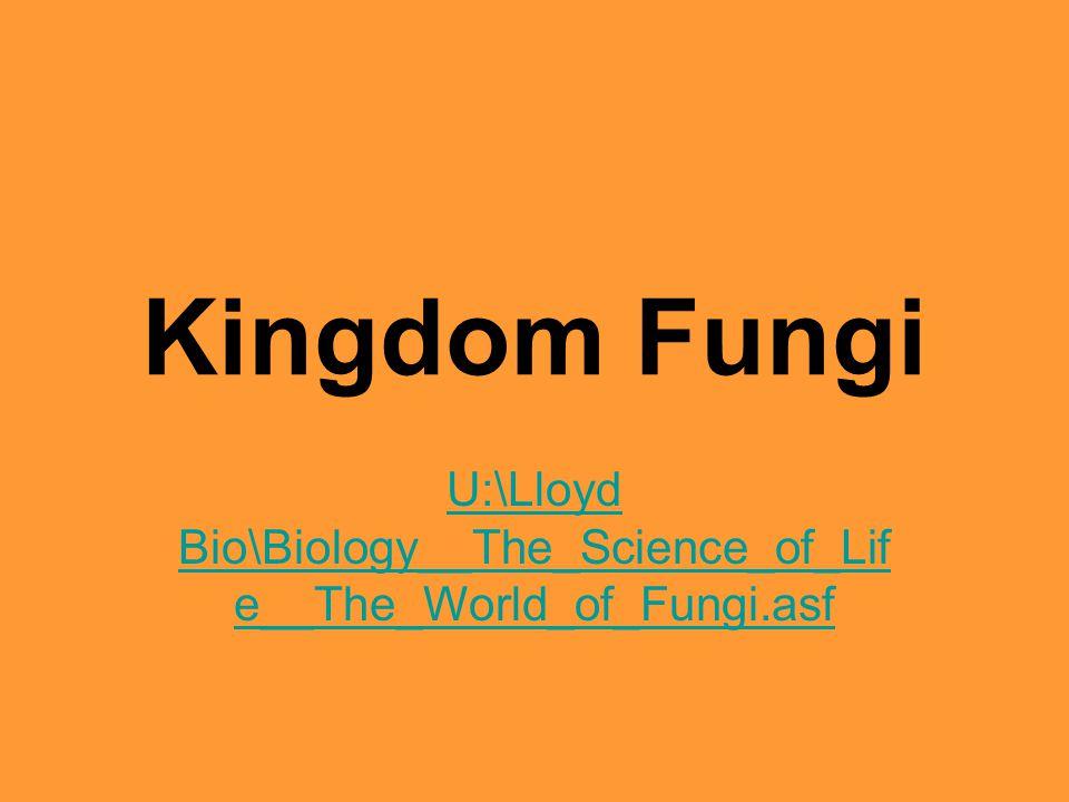 Kingdom Fungi U:\Lloyd Bio\Biology__The_Science_of_Lif e__The_World_of_Fungi.asf