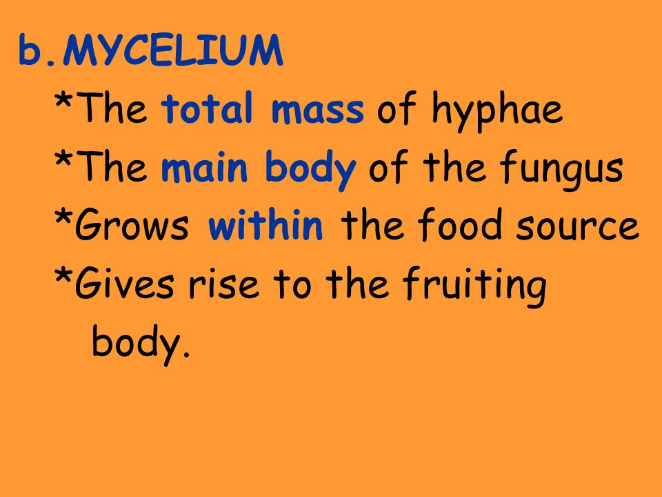 b.MYCELIUM *The total mass of hyphae *The main body of the fungus *Grows within the food source *Gives rise to the fruiting body.