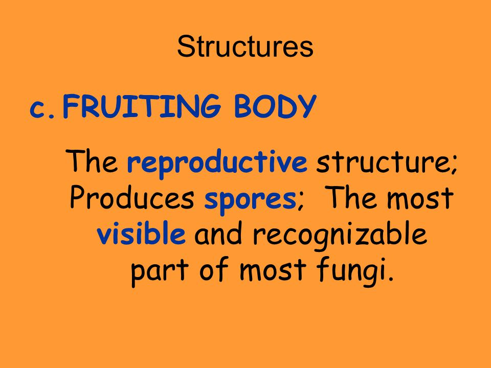 Structures c.FRUITING BODY The reproductive structure; Produces spores; The most visible and recognizable part of most fungi.