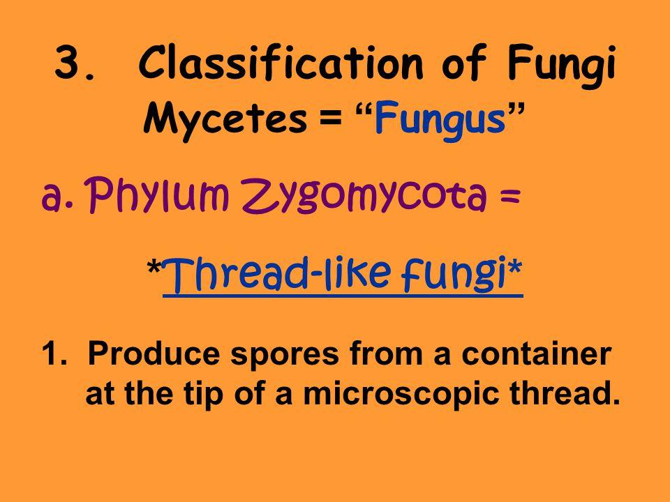 3. Classification of Fungi Mycetes = Fungus a.Phylum Zygomycota = * Thread-like fungi * 1.