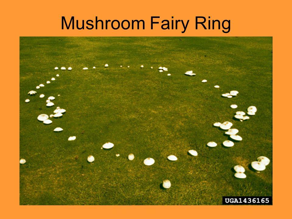 Mushroom Fairy Ring