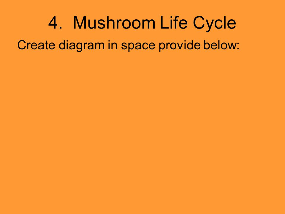 4. Mushroom Life Cycle Create diagram in space provide below: