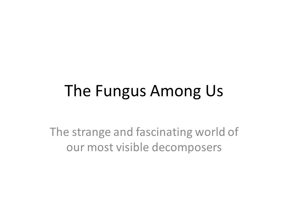 The Fungus Among Us The strange and fascinating world of our most visible decomposers