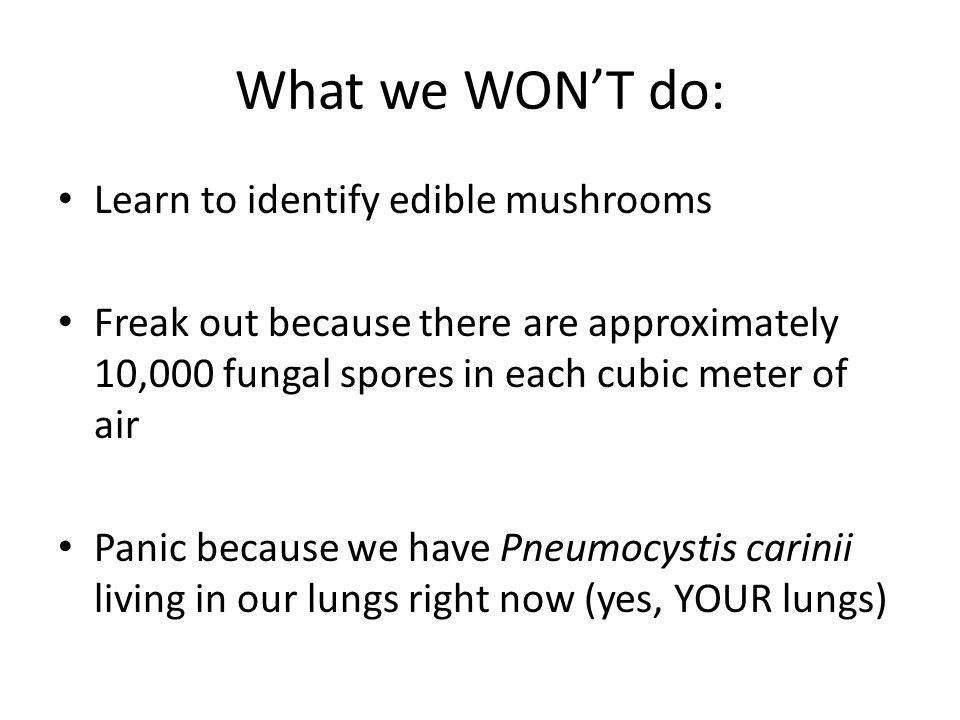 What we WON'T do: Learn to identify edible mushrooms Freak out because there are approximately 10,000 fungal spores in each cubic meter of air Panic because we have Pneumocystis carinii living in our lungs right now (yes, YOUR lungs)