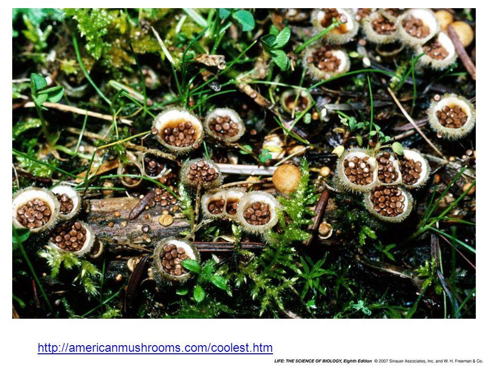 http://americanmushrooms.com/coolest.htm