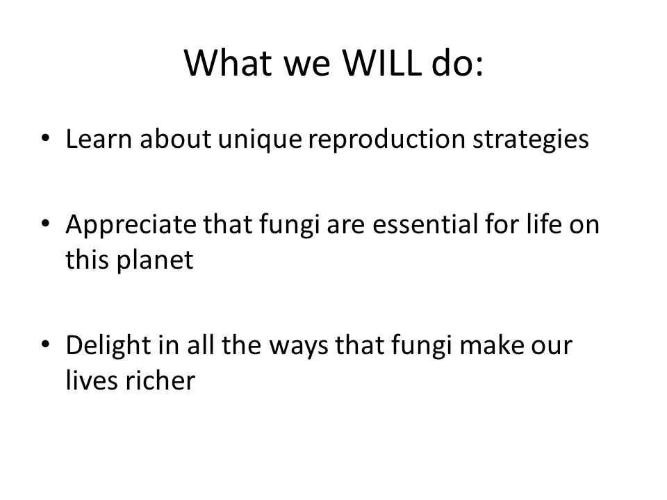 What we WILL do: Learn about unique reproduction strategies Appreciate that fungi are essential for life on this planet Delight in all the ways that fungi make our lives richer