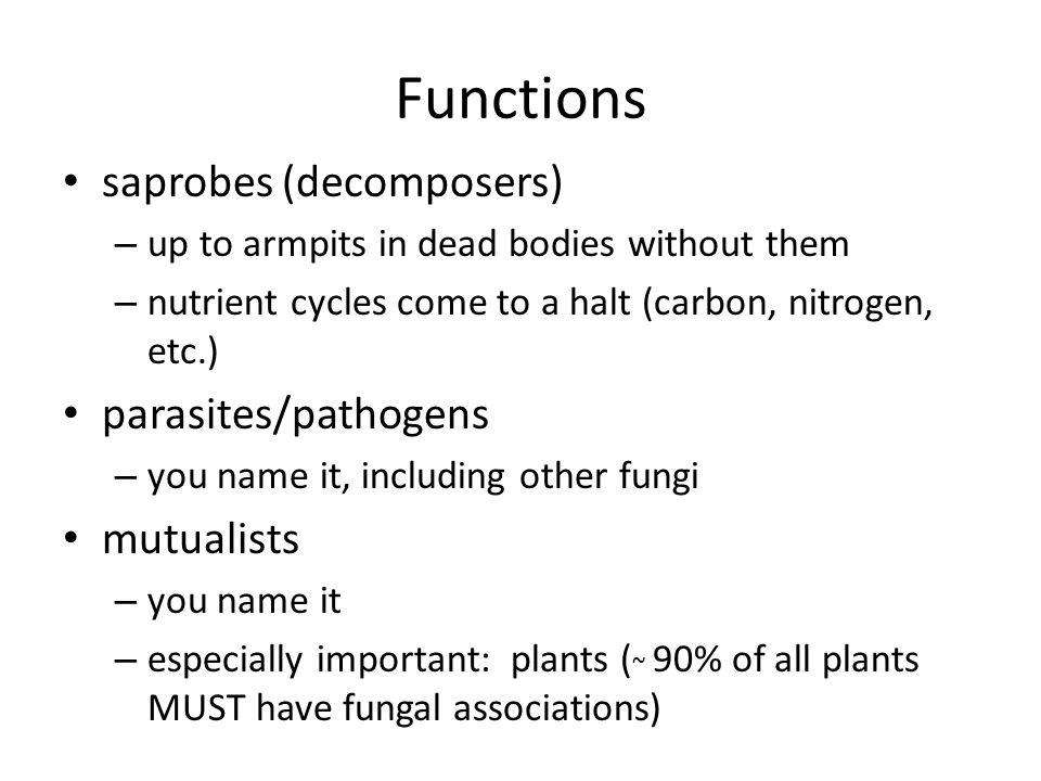 Ectomycorrhizae vs. Arbuscular mycorrhizae