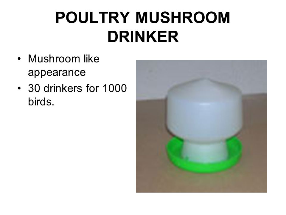 POULTRY MUSHROOM DRINKER Mushroom like appearance 30 drinkers for 1000 birds.
