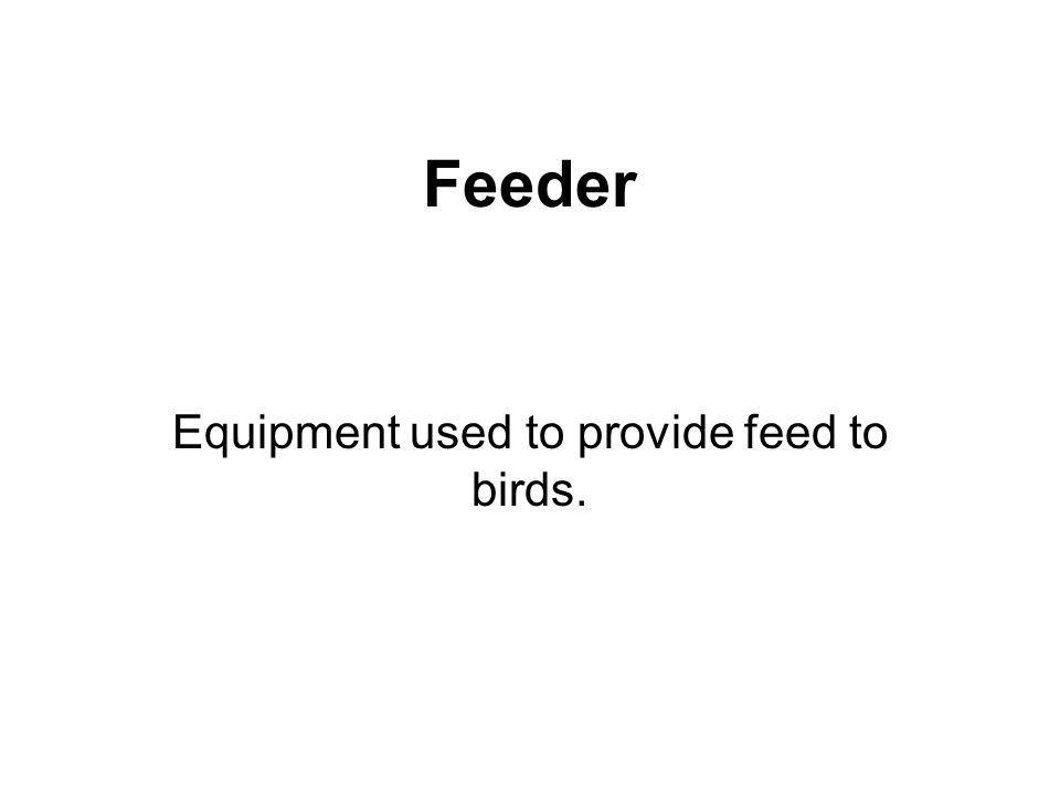 Feeder Equipment used to provide feed to birds.