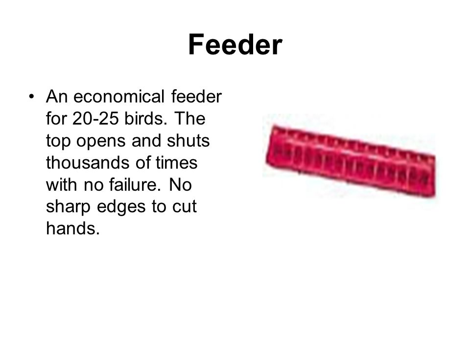 Feeder An economical feeder for 20-25 birds.