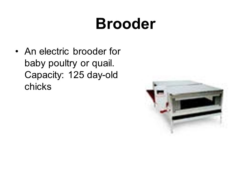 Brooder An electric brooder for baby poultry or quail. Capacity: 125 day-old chicks
