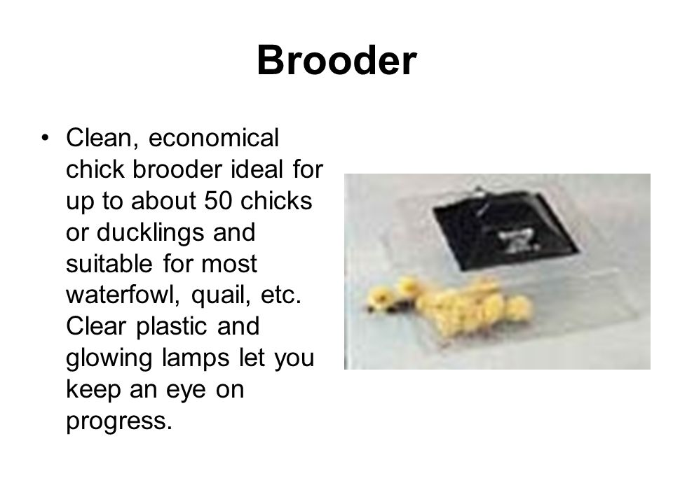 Brooder Clean, economical chick brooder ideal for up to about 50 chicks or ducklings and suitable for most waterfowl, quail, etc.