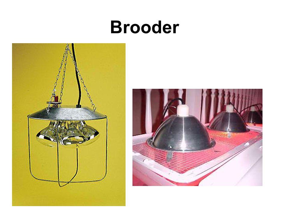 Brooder