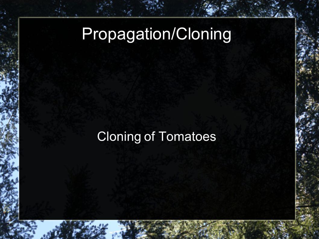 Propagation/Cloning Cloning of Tomatoes