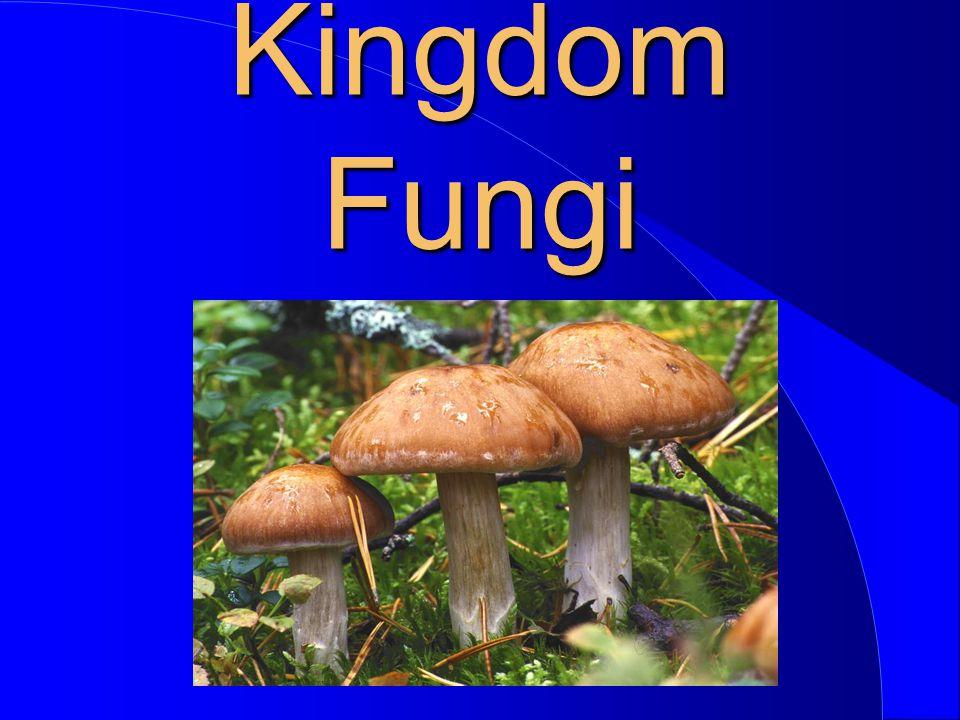 Fungi In The Scheme Of Life Plantae Fungi Monera Animalia........................ Protista