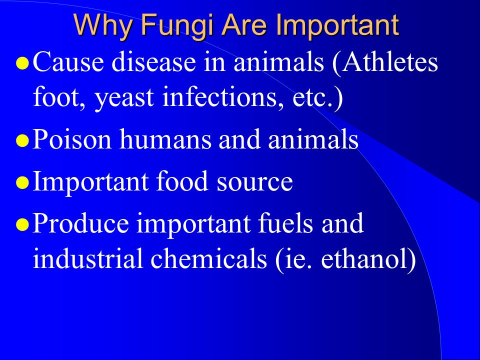 Why Fungi Are Important Cause disease in animals (Athletes foot, yeast infections, etc.) Poison humans and animals Important food source Produce impor