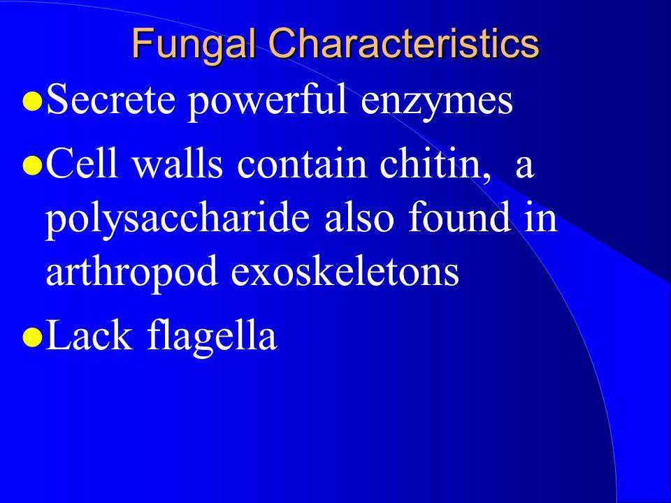 Ascomycota (The Sac Fungi) Hyphae have septa.