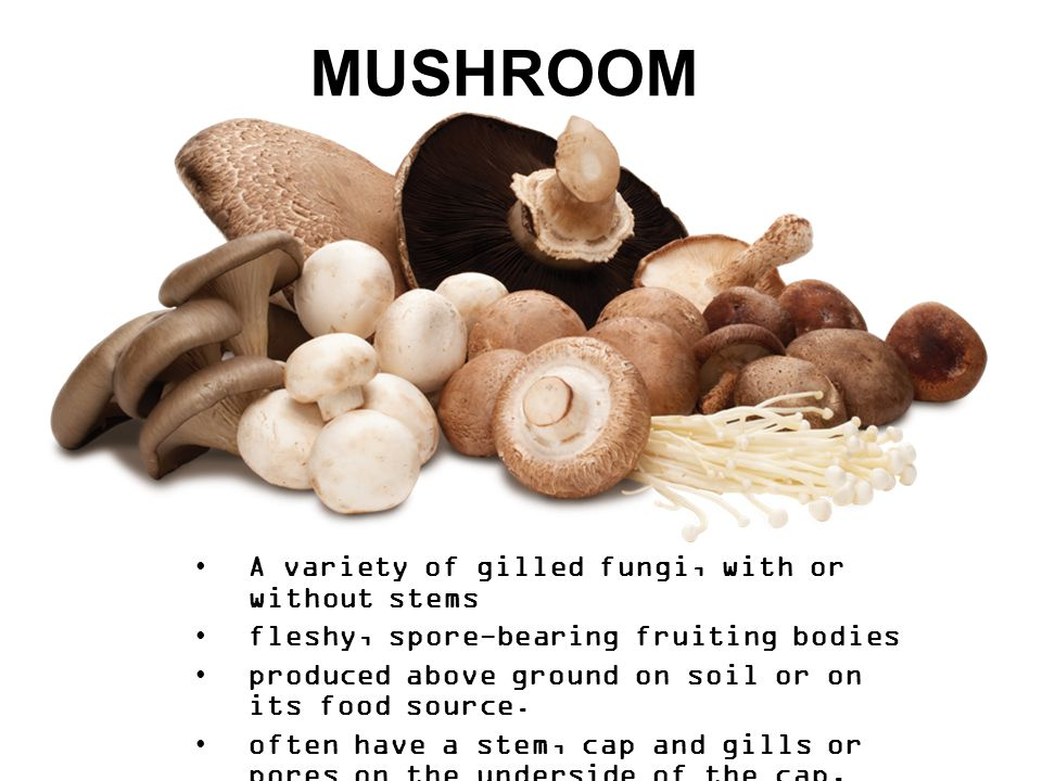 MUSHROOM A variety of gilled fungi, with or without stems fleshy, spore-bearing fruiting bodies produced above ground on soil or on its food source.