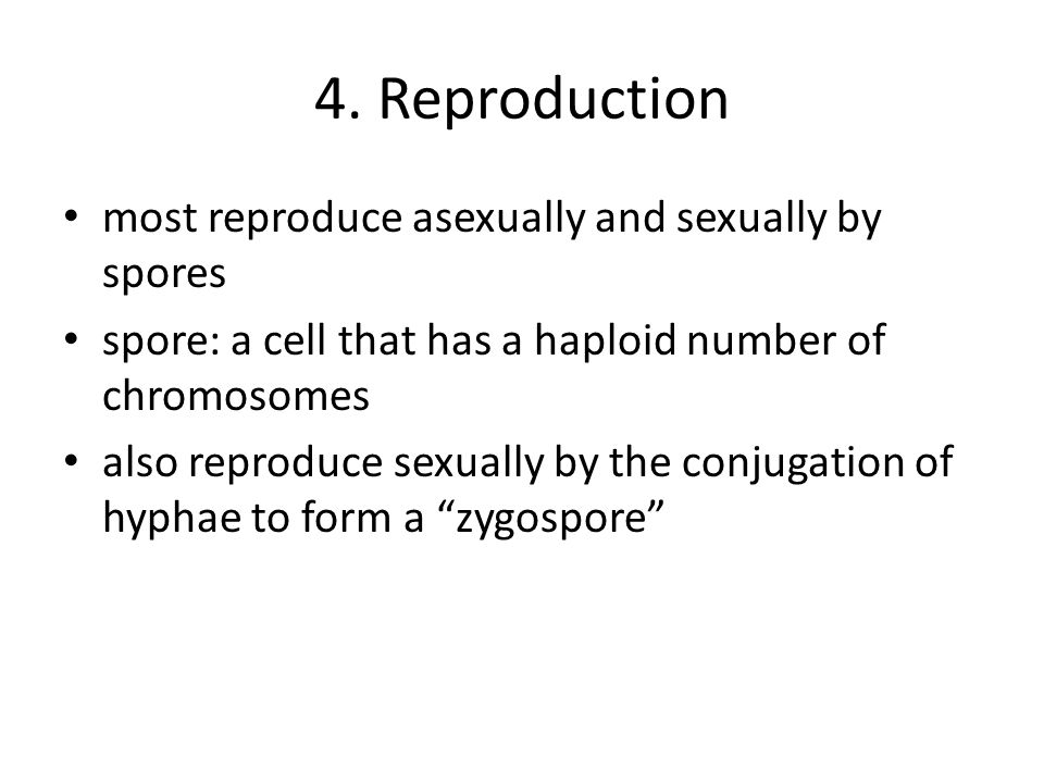 4. Reproduction most reproduce asexually and sexually by spores spore: a cell that has a haploid number of chromosomes also reproduce sexually by the