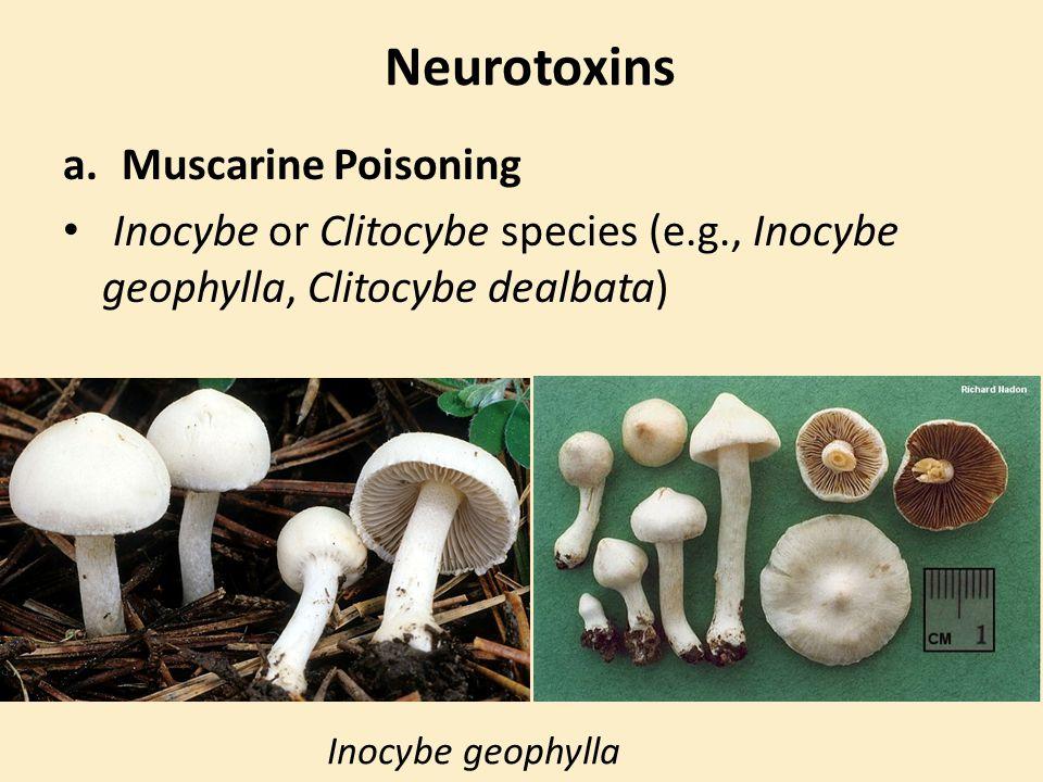 Neurotoxins a.Muscarine Poisoning Inocybe or Clitocybe species (e.g., Inocybe geophylla, Clitocybe dealbata) Inocybe geophylla