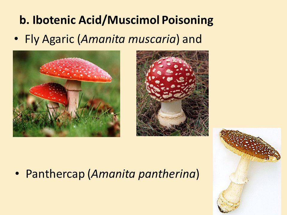 b. Ibotenic Acid/Muscimol Poisoning Fly Agaric (Amanita muscaria) and Panthercap (Amanita pantherina)