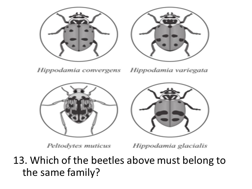 13. Which of the beetles above must belong to the same family?