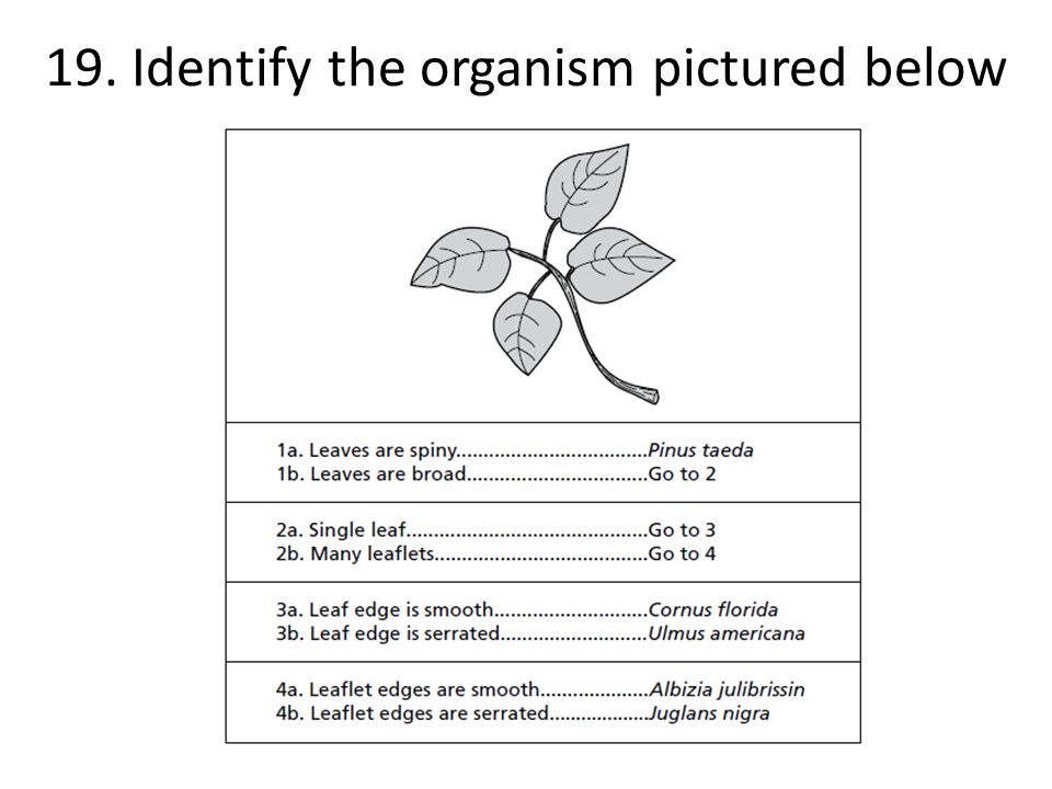20. Identify the organism pictured below