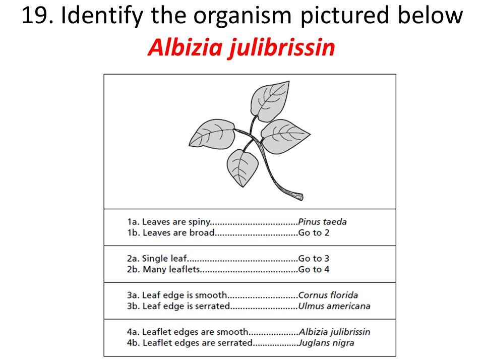 20. Identify the organism pictured below Pusa hispida