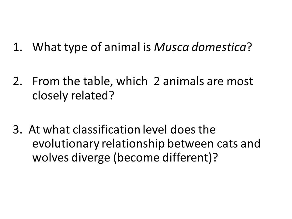 1.What type of animal is Musca domestica? 2.From the table, which 2 animals are most closely related? 3. At what classification level does the evoluti