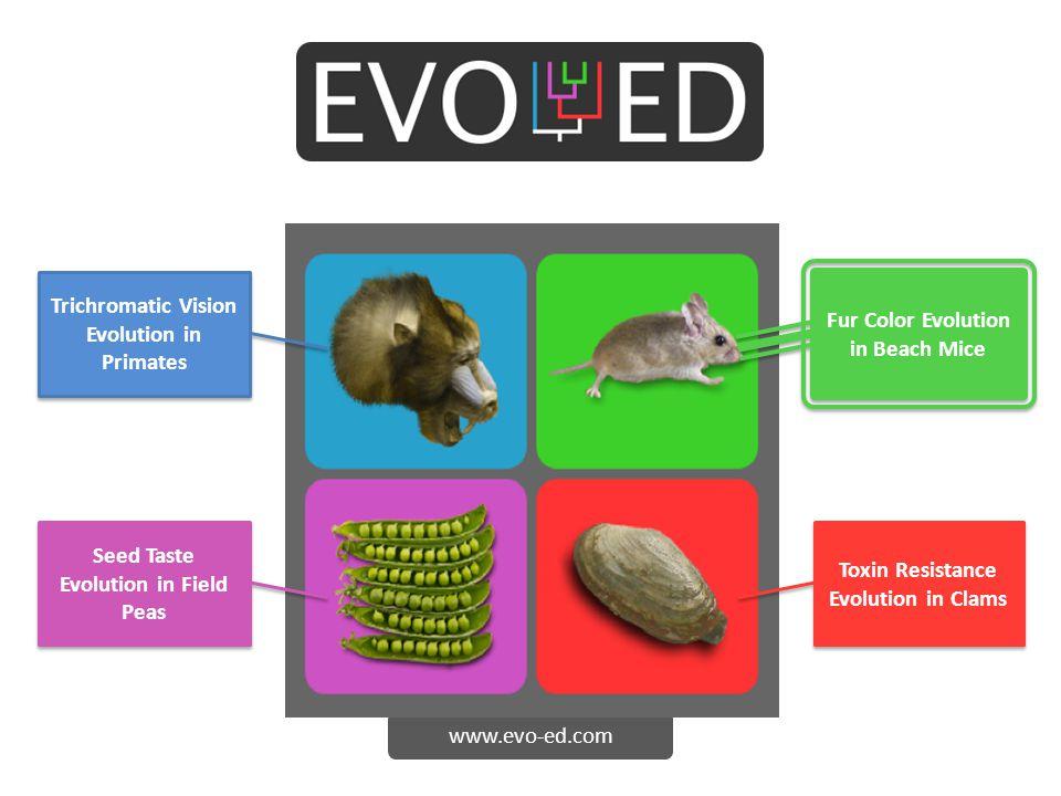 www.evo-ed.com Trichromatic Vision Evolution in Primates Fur Color Evolution in Beach Mice Toxin Resistance Evolution in Clams Seed Taste Evolution in Field Peas