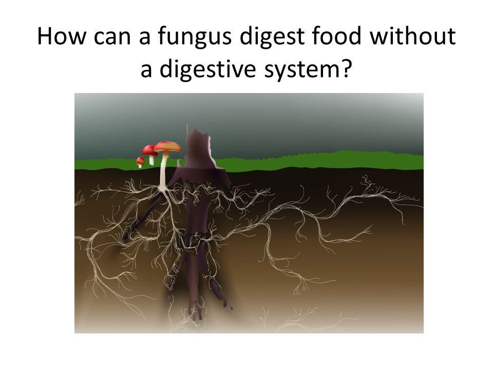 Build mushroom (Biosynthesis) Build FIBER molecules by linking 5 glucose monomers.