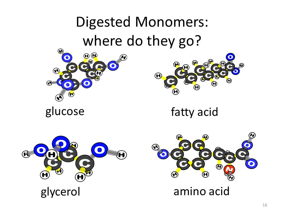 Digested Monomers: where do they go glucose glycerol amino acid fatty acid 18