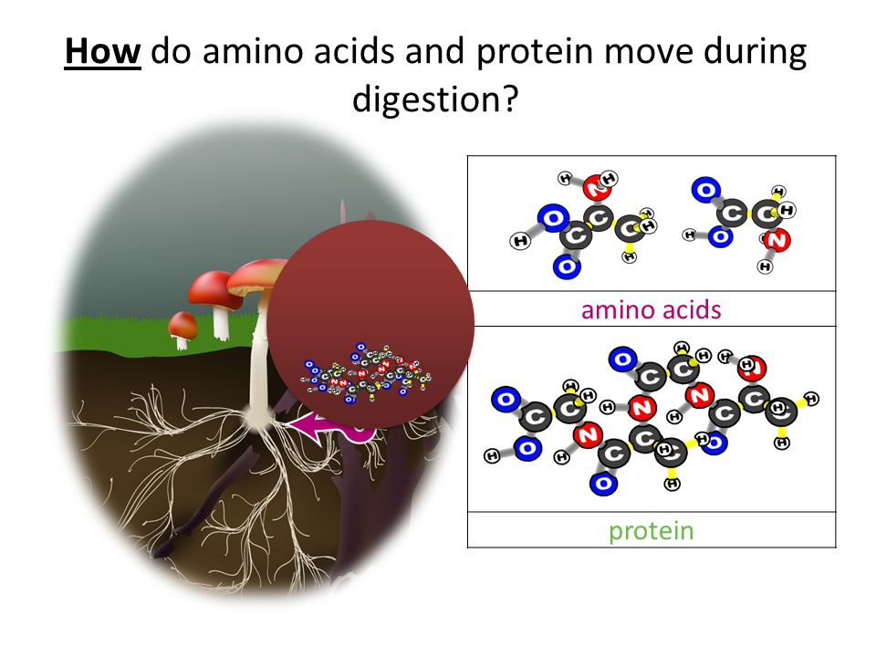 What happens inside the fungus cell during biosynthesis? Chemical change