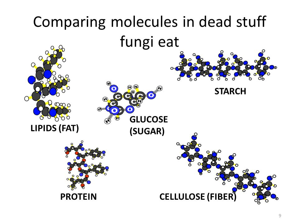 Comparing molecules in dead stuff fungi eat LIPIDS (FAT) STARCH PROTEINCELLULOSE (FIBER) GLUCOSE (SUGAR) 9