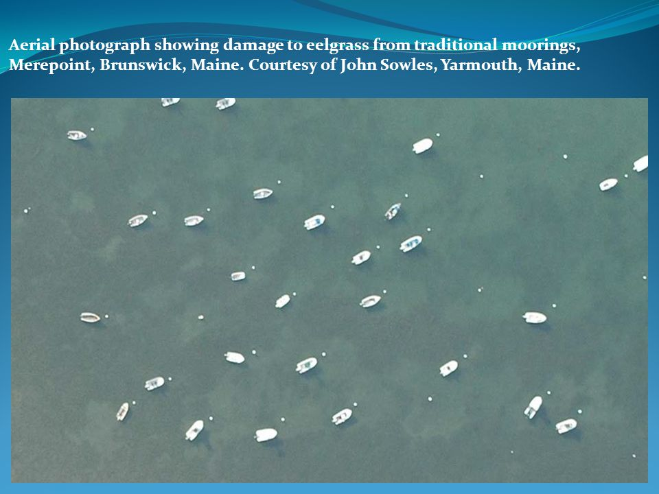 Aerial photograph showing damage to eelgrass from traditional moorings, Merepoint, Brunswick, Maine.