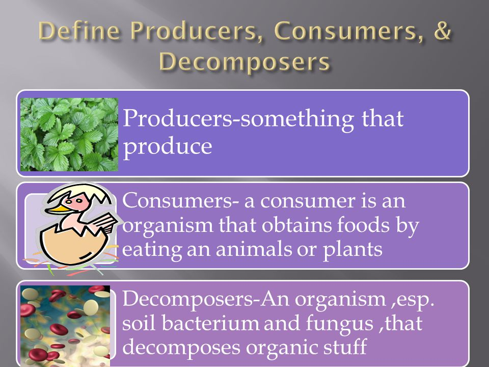 Producers-something that produce Consumers- a consumer is an organism that obtains foods by eating an animals or plants Decomposers-An organism,esp.